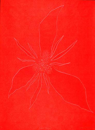 """Blood Flower"""
